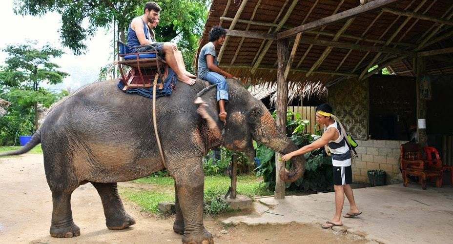 elephant ride krabi