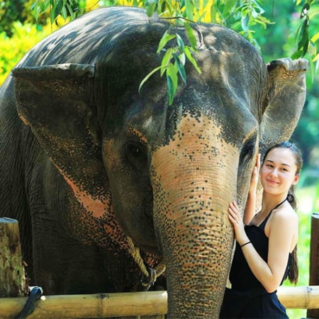 krabi elephant house sanctuary